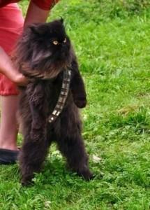 Cat wookie