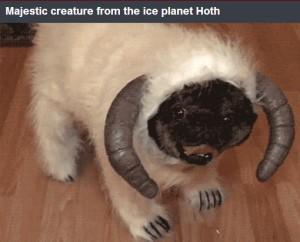 Darklighter - Hoth creature